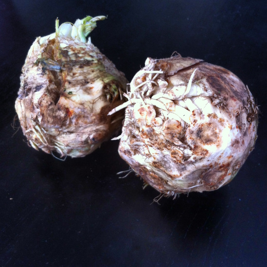 The raw celery root bulb doesn't look very attractive, but once peeled and cooked, its delicate flavors make an earthy and delicious accompaniment to heavy meat and fowl dishes. Source: Micki Seibel, March 2013